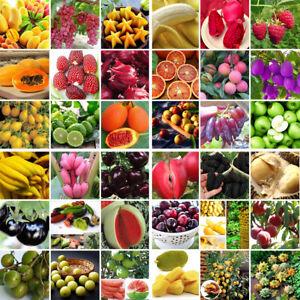 Obst-Samen-Hausgarten-BIO-Gemuese-Obst-Pflanze-Saat-Saatgut-Eco-Erdbeere-Tomaten