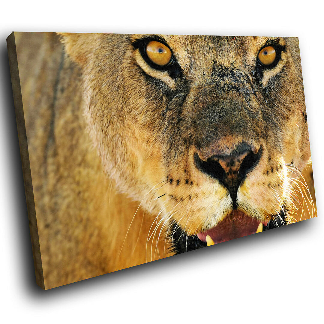 A065 braun Lion Orange Cool Funky Animal Canvas Wall Art Large Picture Prints