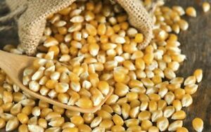 Popcorn Kernels 1kg 2kg 500g