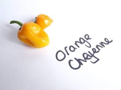 10 Arancione Cheyenne Semi Di Peperoncino- Merci Di Alta Qualità