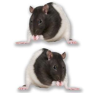 2 x I Love Rats Vinyl Sticker Laptop Travel Luggage Car #6142
