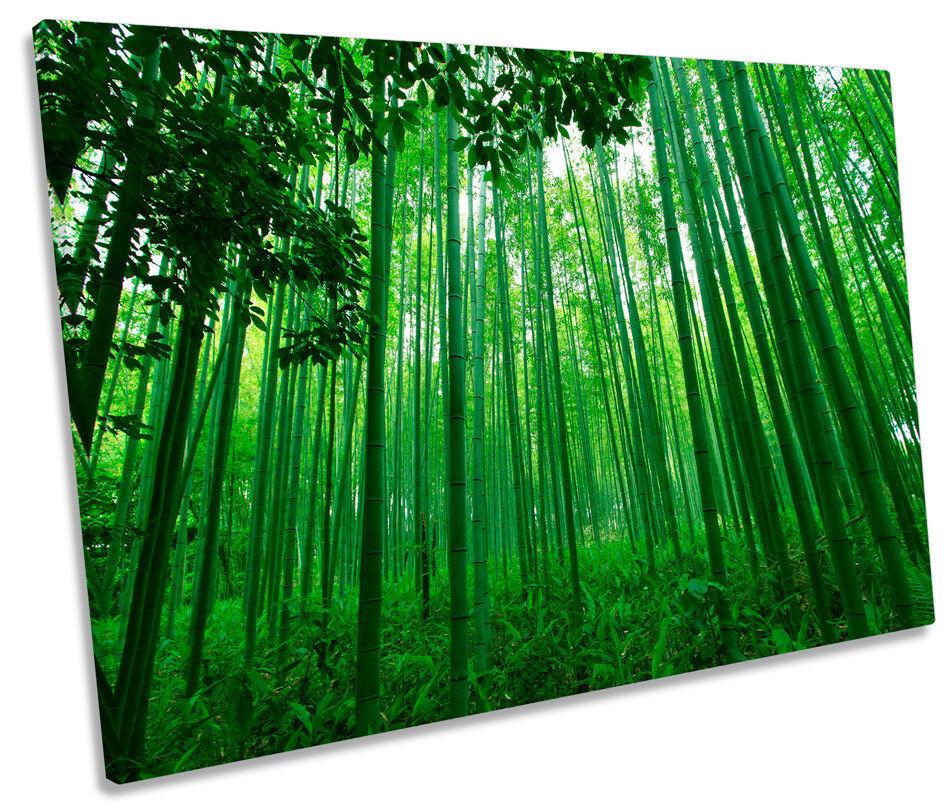 verde Foresta Di Bambù Foto Tela Singola Wall Art Print
