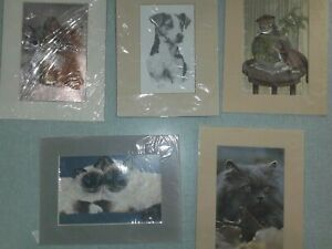 mixed-lot-of-vintage-mounted-prints-cats-and-dogs-x-5