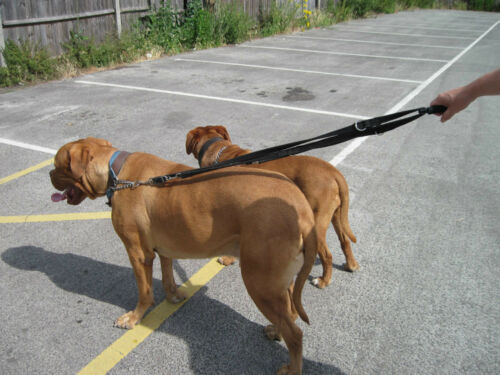 My Dog Clip X2 by My Buggy Buddy Easy to clip to single or multiple dog leads