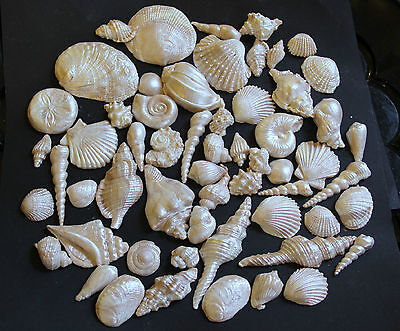 60 QUALITY edible seashells beach wedding birthday cake topper