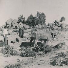 PORTUGAL c. 1950 - Attelage de Boeufs Charette Roues en Bois - DIV 9213