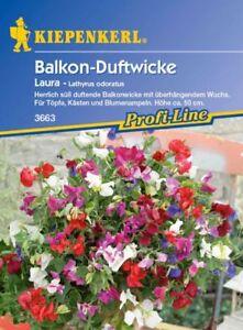 Kiepenkerl-balcon-guisante-perfumado-3663-Laura-dulce-perfumado-Ollas-Cajas-y