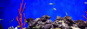 The Best Fish Aquariums For Beginners