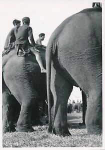 LAOS-c-1940-Elephants-Domestiques-Indochine-P1029