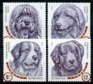 Romania-2019-MNH-Dog-Breeds-Romanian-Shepherd-Dogs-4v-Set-Pets-Animals-Stamps
