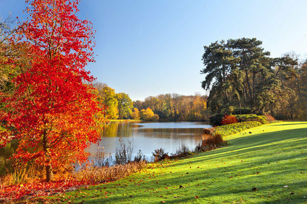 3D Autumn Lake Red Leaves Full Wall Mural Photo Wallpaper Print Paper Home Decor