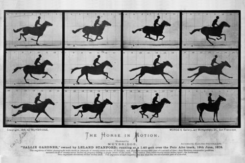 Photographs by Eadweard Muybridge The Horse in Motion 1876