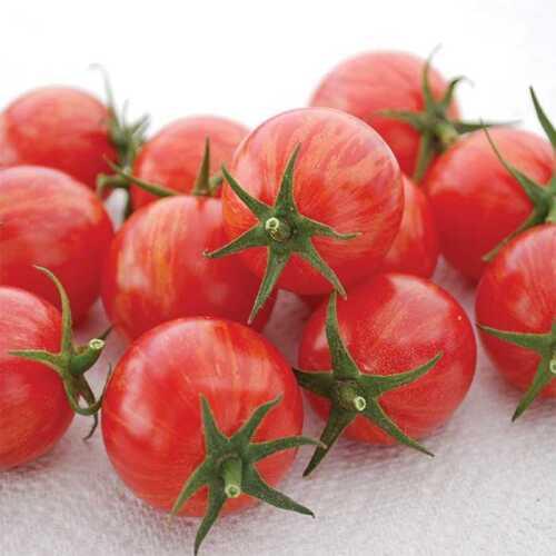Cherry Tomato PINK BUMBLEBEE  10 20 Seeds Heirloom Vegetable Organic