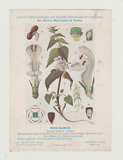 FICHE N° 15 PLANTE MEDICINALE/COMITE INTERMINISTERIEL-ORTIE BLANCHE/ED.GAGNEPAIN