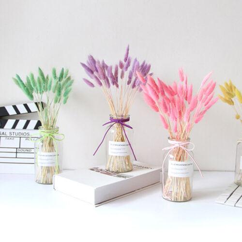 Naturelles fleurs séchées bouquets Bunny Tails Lapin Queue herbe Lagurus Ovatus