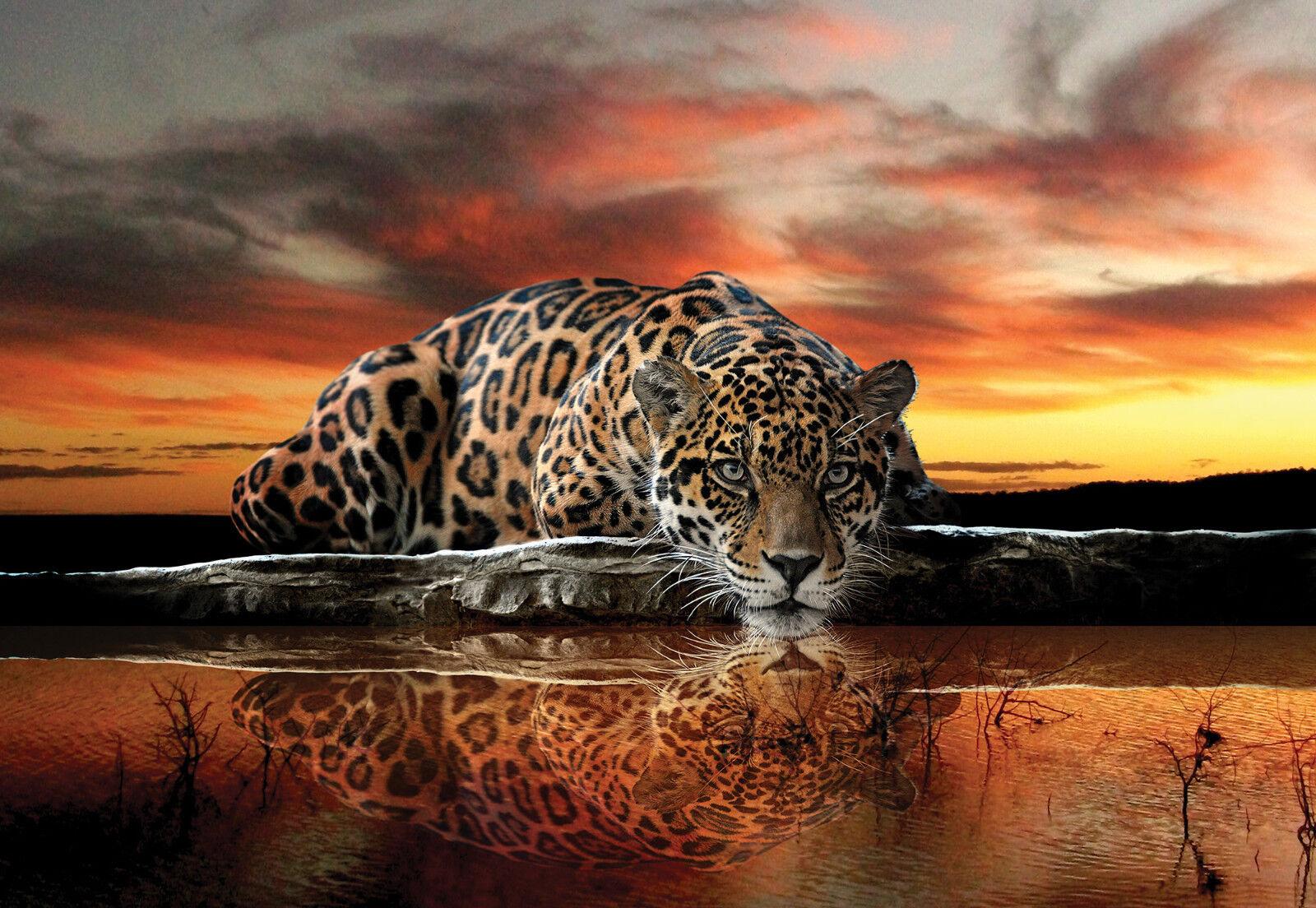 VLIES Fototapete-LEOPARD-(126)-Raubtiere Katze Tiger Löwe Jaguar Panther Mural