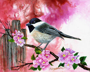 Chickadee-with-Apple-Blossoms-8X10-BIRD-Print-from-Artist-Sherry-Shipley