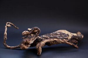 Image Is Loading Dry Mandrake Whole Root No 11 Mandragora Officinarum