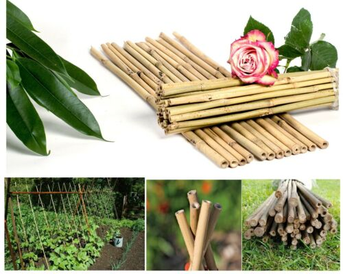 Strong Bamboo Cane Plant Ties Vegetable Support Sticks Poles 2,3,4,5,6 /& 7 Feets