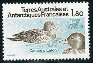 TIMBRE-T-A-A-F-TERRES-AUSTRALES-NEUF-N-98-FAUNE-CANARD-D-039-EATON