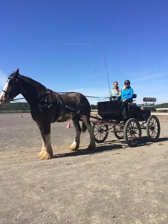 Large Wagonette from Bird-in-Hand for draft horse  with harness  team promotions