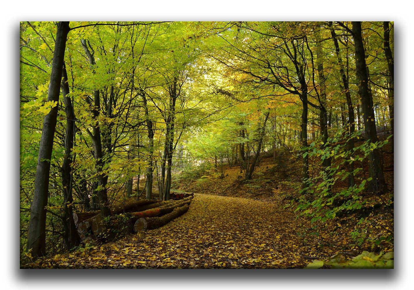 Leinwand Bild Wandbild Keilrahmenbild Herbst Herbst Herbst Wald  Bäume Laubbäume Landschaft 033adb