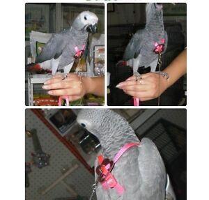 Adjustab Medium Parrot Bird Harness Leash Multicolor Light Soft Fashion