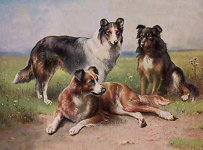 BORDER COLLIE STANDING DOG LOVELY GREETINGS NOTE CARD