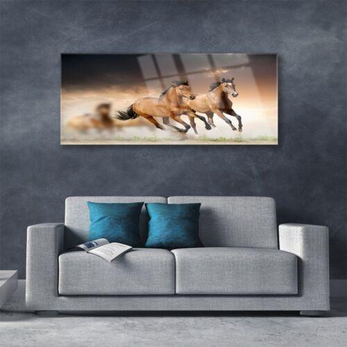 Acrylglasbilder Wandbilder Druck 125x50 Pferde Tiere