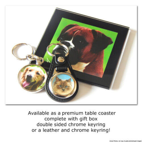 BRITISH SHORTHAIR CREAM TABBY Cat Kitten Quality Leather and Chrome Keyring