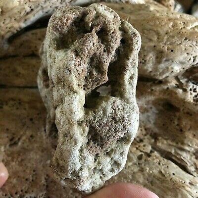 Holey Ocean Concretion Rock Odin Stone Hag Stone Fairy Stone Good Luck Stone Ebay Hag is the third, and for now the last, boss in the darkest dungeon which dwells in the werald. holey ocean concretion rock odin stone hag stone fairy stone good luck stone ebay