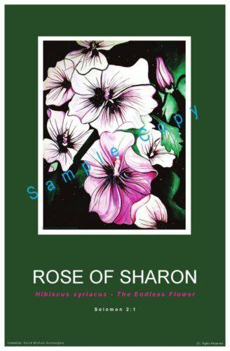 Rose of Sharon Donnangelo
