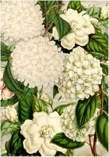flores Decoupage-bastelpapier-Soft papel-serviettentechnik-Vintage-SHABBY 12308
