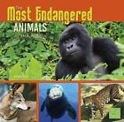 The Most Endangered Animals in the World by Tammy Gagne (Paperback, 2016)
