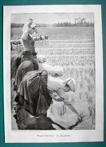 RICE-FIELD-Young-Women-Laborers-VICTORIAN-Era-Print