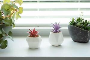 New set of 2 decorative succulent planter porcelain golden trim White gift decor