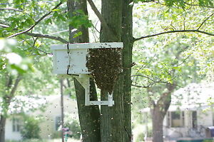 Image Is Loading HONEYBEE SWARM TRAP