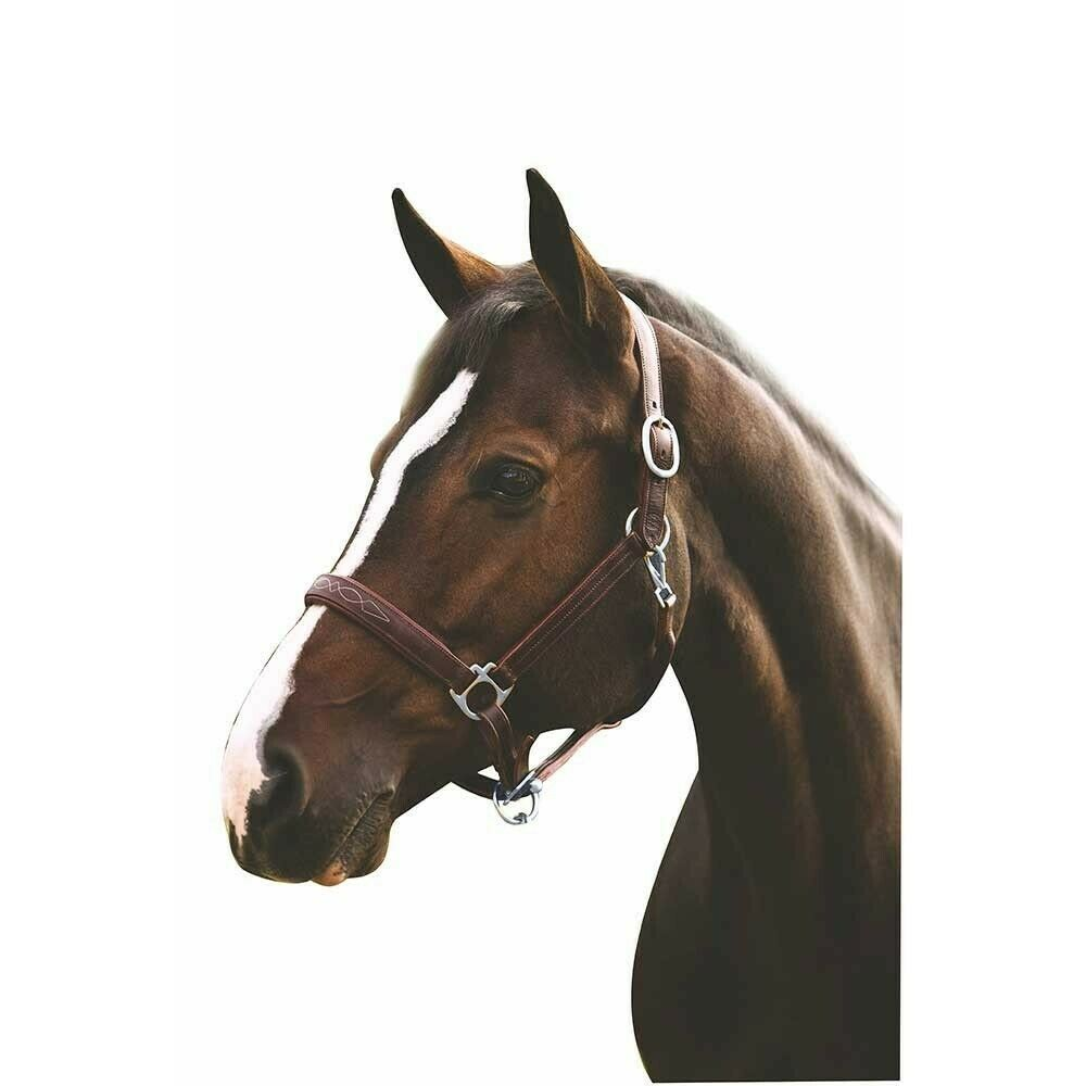 HDR Pony Fancy Padded Leather Halter