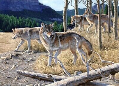 Art Print Black Wolf White Wolf Oil painting Picture Printed on canvas P133
