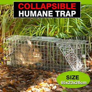 Where To Get A Humane Trap For Cats