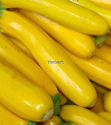 ZUCCHINI YELLOW/GOLDEN  Gelbes Fruchtfleisch,    10 Zucchini-Samen handverlesen