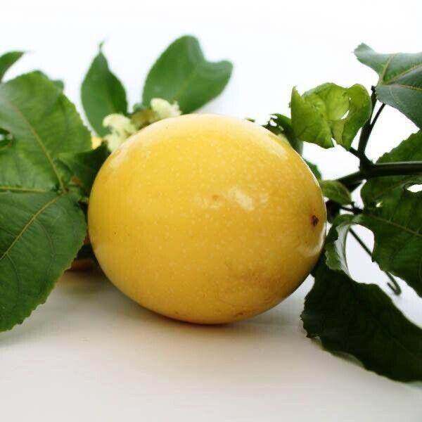 Passionfruit (Panama Gold) Seeds😊50+ each. Care Instructions Inc. Hybrid X