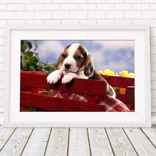 Cute Poster Picture Print Sizes A5 to A0 **FREE DELIVERY** BEAGLE PUPPY DOG