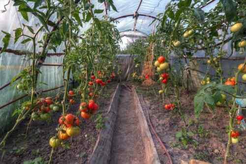 Uv4 film serre jardin film tunnel film serre à tomates 8m de large