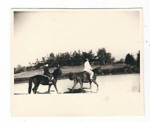 14/885 FOTO PFERDE SACHSEN um 1956