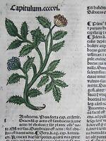 Incunable Leaf Hortus Sanitatis Botany Sambucus Colored Woodcut Venice - 1500