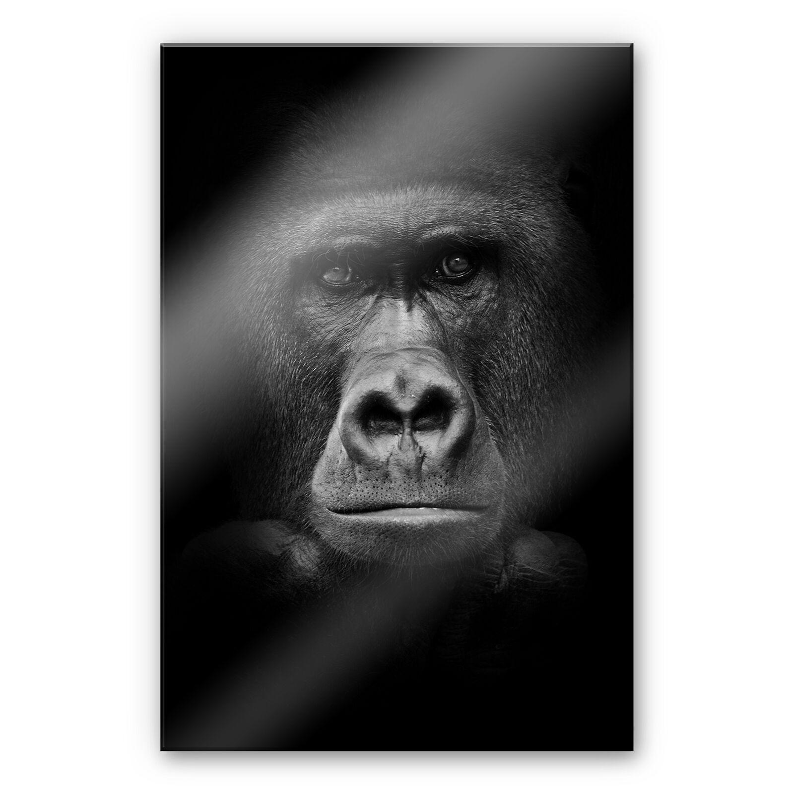 Acrylglas XXL Wandbild Gorilla schwarz weiß BILD hohe Farbechtheit WANDDEKO