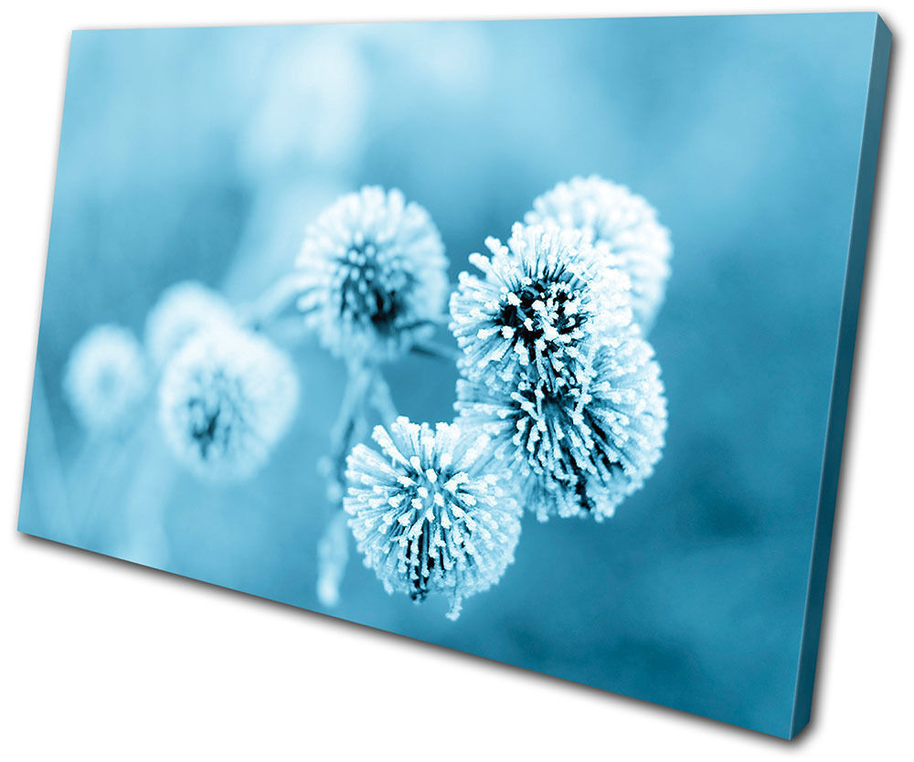 Canvas Art Picture Print Decorative Photo Wall Dandelion Floral Ice Flower Plant
