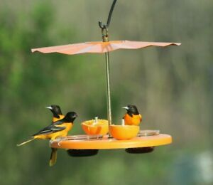 Kettle-Moraine-Recycled-Super-Oriole-Bird-Feeder-Fruit-Jelly-Mealworms-Oranges
