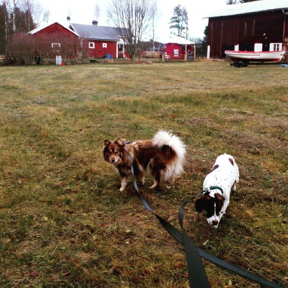 Jagt hytte / Dalarna Hus i Sverige